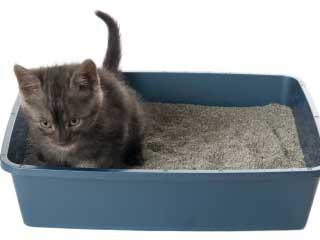 Feline Bahavioral Cconsultations including LItterbox Avoidance Issues | Exclusively Cats Veterinary Hospital, Waterford, MI, USA